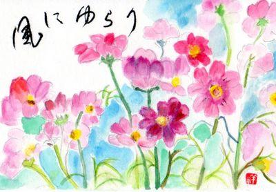 kosumosu2.jpg